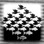 Escher - birds or fish?